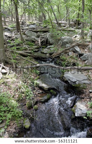 A small stream through the woods - stock photo