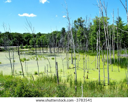 A small swamp at the side of the road in Pennsylvania - stock photo