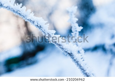 a small twig covered with hoarfrost ice crystals in winter - stock photo