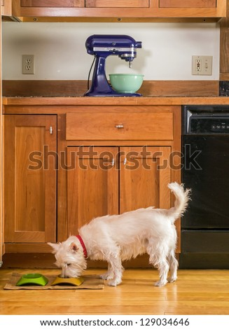 A small white dog eating his dinner out of a bowl in the kitchen - stock photo