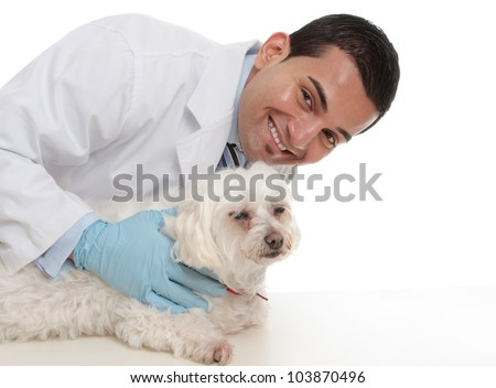 A smiling caring vet with a sick maltese terrier pet dog.