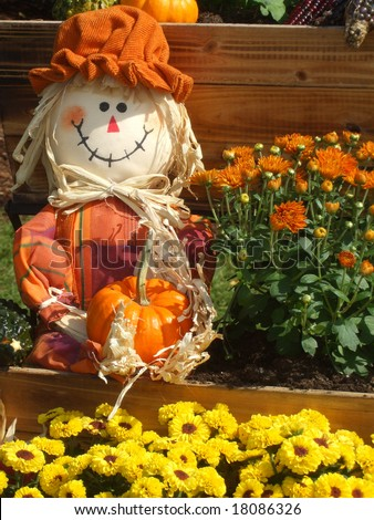 A smiling scarecrow holds a pumpkin among a wagon full of autumn mums. Seasonal, halloween, thanksgiving concept.