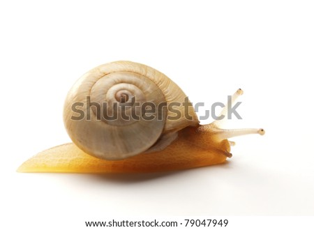A snail macro shot isolated on a white background - stock photo