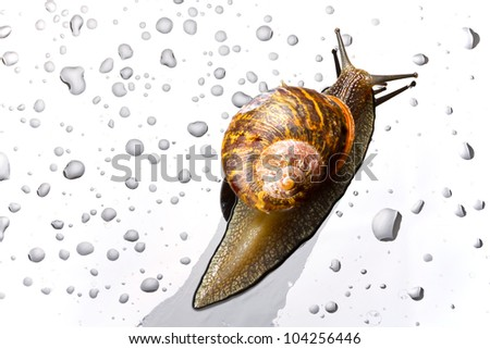 A snail on a glass surface with water drops - stock photo