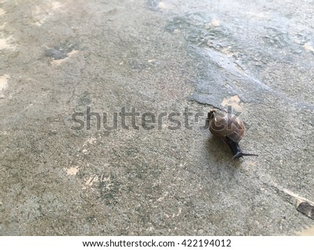 A snail on the concrete floor