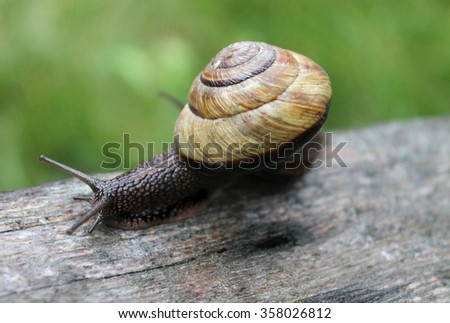 A snail out for a stroll after a rainstorm