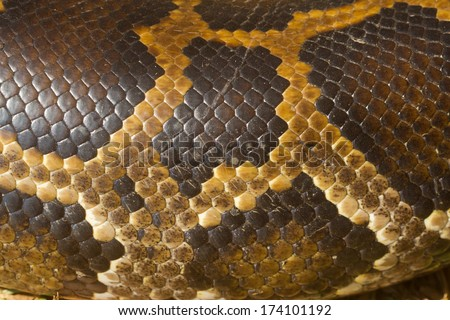 a snake skin with an pattern  - stock photo