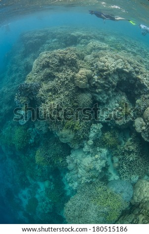 A snorkeler swims along the edge of a reef drop off in Miil Channel, Yap, Micronesia. This idyllic tropical island is a favorite destination for scuba divers, snorkelers, and recreational fishermen.