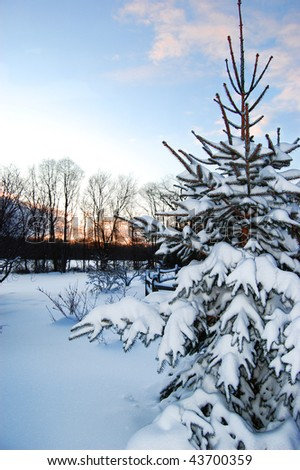 A snow-covered backyard at sunrise