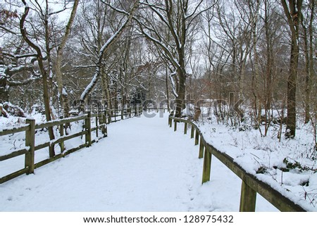 A Snow Covered Footpath Through a Woodland Forest.