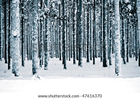 a snow covered forest in the north of sweden - stock photo