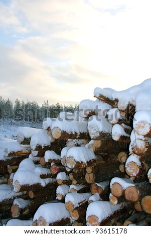 A snow covered pile of firewood in winter forest. - stock photo