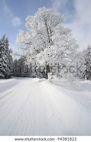a snow-covered tree on the road - stock photo