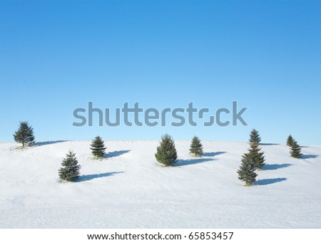 A snowy hillside with small evergreen trees and a clear blue sky. - stock photo