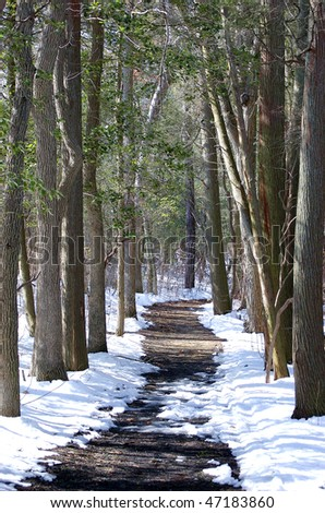 A snowy, tree-lined path through the forest - stock photo