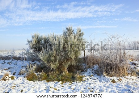 a snowy winter landscape with shrubs covered in frost - stock photo