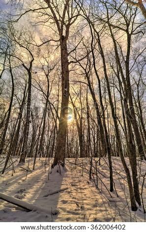 A snowy winter sunrise scene along a wooded trail in Toledo Ohio. - stock photo