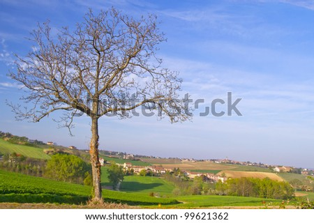 A solitary naked tree over a landscape