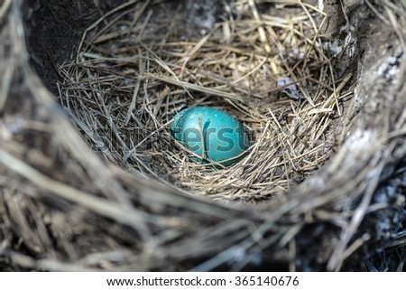 A solitary robin's egg in a nest.