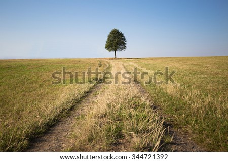 A solitary tree standing in a field against the horizon, blue sky and path leading up to it. - stock photo