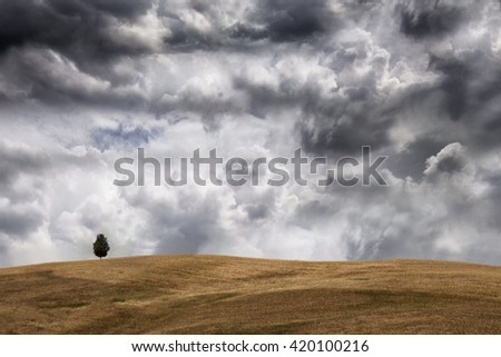 A solitary tree waiting sunset in Tuscany fields landscape just before the rain under a cloudy sky