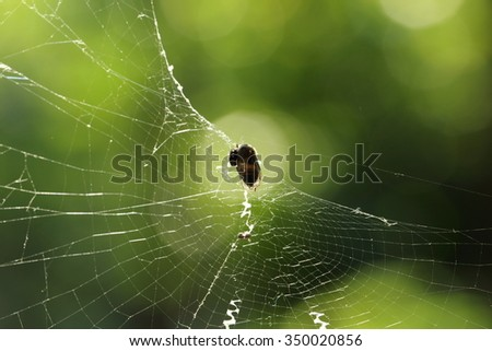A spider has caught a fly in it's web. - stock photo