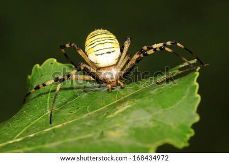 a spider insects perched on a spider web