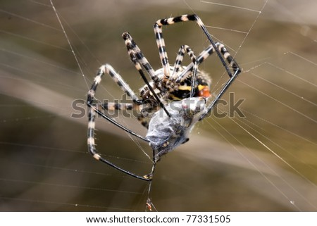 a spider is captive to its prey in its network - stock photo