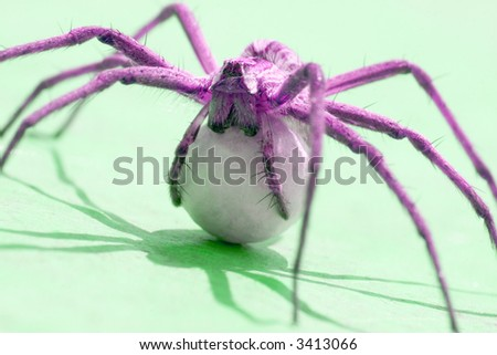 A spider with an egg sack. Back lite. Close up view. Colored. - stock photo