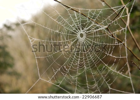 A spiders' web covered in frost on a cold day in a natural setting.