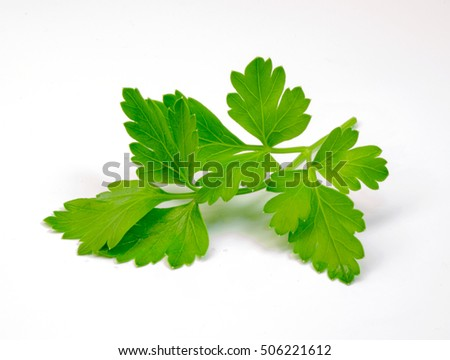 a sprig of fresh and healthy parsley
