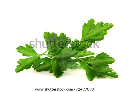a sprig of fresh parsley on a white background