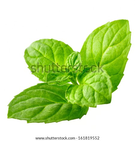 A sprig of fresh peppermint leaves on a white background. - stock photo