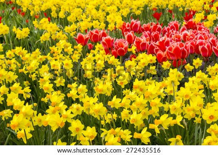 A spring field with spring flowers in Germany - stock photo