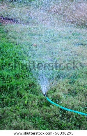 A sprinkler attached to a hose watering the grass lawn. - stock photo