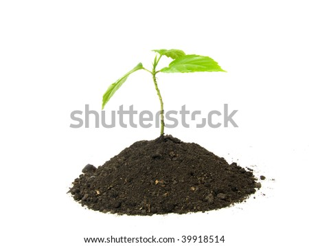 a sprout grows from soil on a white background - stock photo