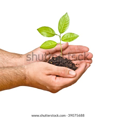 A sprout in hands as a symbol of nature protection