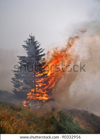 A spruce tree in fire - stock photo