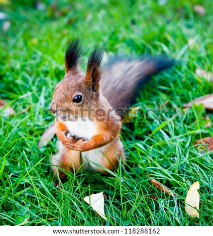 A squirrel, sunny day - stock photo