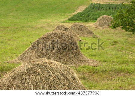 A stack of hay - stock photo