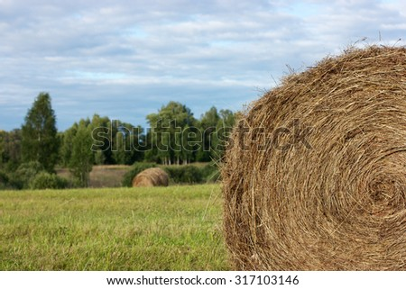 A stack of hay twisted in a circle in the foreground. Forest and blue sky in the background. Space for typing text