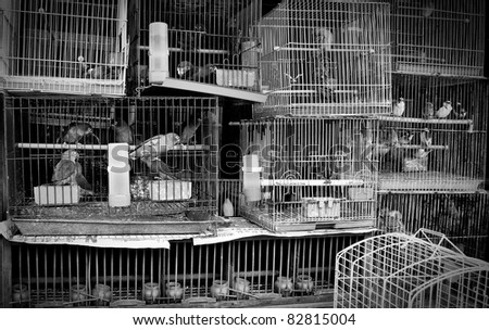 A stack of mistreated caged birds in a pet store - stock photo