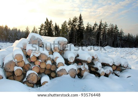 A stack of wooden logs at forest clear cut in arctic winter conditions, with edge of forest and sky on the background. - stock photo