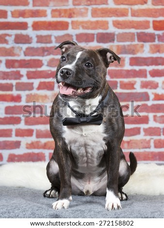 A staffordshire portrait with a black bow. - stock photo