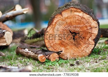 A staple of biomass, arranged firewood. - stock photo