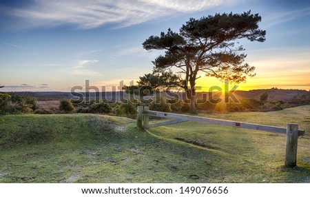 A starburst of sunlight Through a Scots Pine tree at Bratley View in the New Forest National Park in Hampshire - stock photo