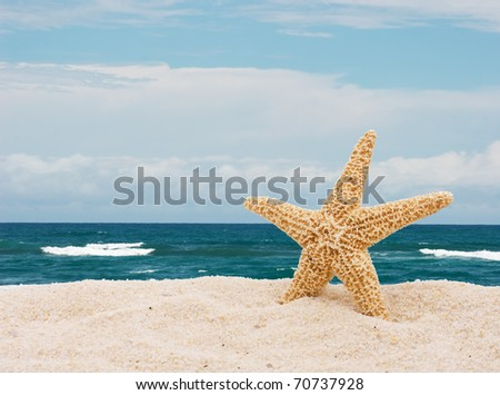 A starfish in the sand at the beach, Day at the beach - stock photo