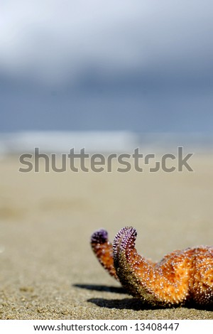 a starfish stranded on the beach at low tide - stock photo
