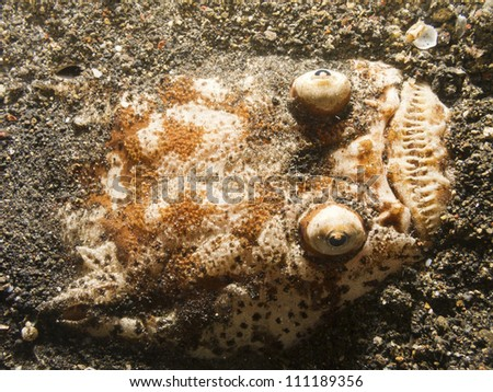 A stargazer fish (Uranoscopidae) buried in the sand at the bottom of the ocean in the Lembeh Straits, Sulawesi, Indonesia. - stock photo