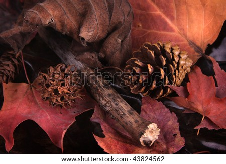 A still-life of pine cones and leaves. - stock photo